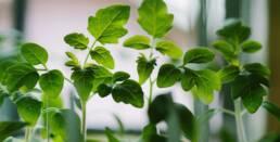 DriehoekResearchSupport plant valorisation